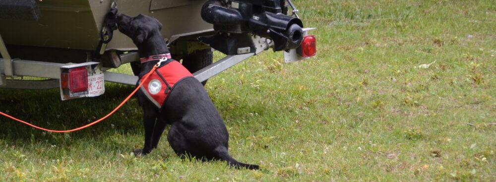 Montana Black Dog Services